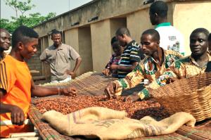 Ghana Producers